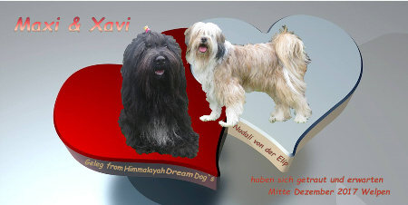 Maxi und Xaver bekommen Tibet Terrier Welpen